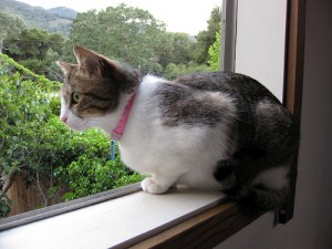 Cat-looking-out-of-a-window-300x225