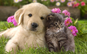 cute-dogs-and-cats-together-wallpaper-i2