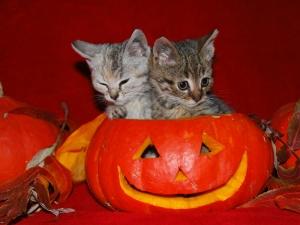 halloween-cats-wallpaper