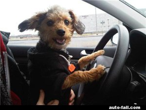 dog-happy-to-be-driving