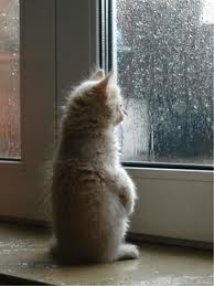 rain kitten