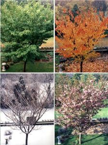 seasons-tree