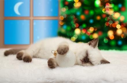 Cat sleeping near the window and Christmas tree